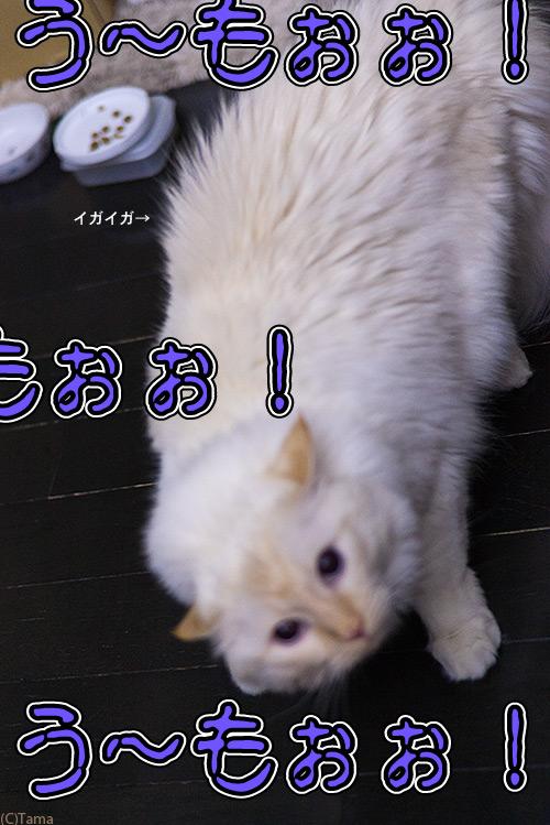 20120529_2.jpg