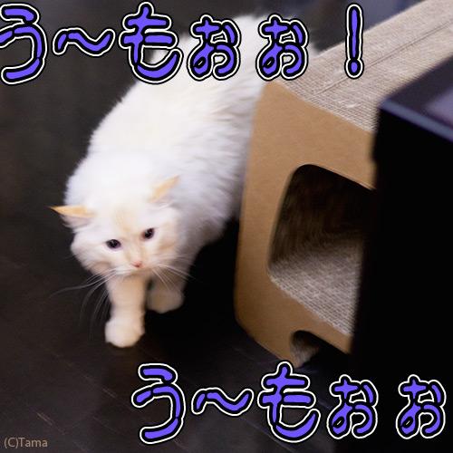 20120529_4.jpg