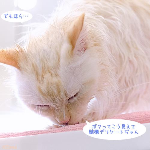 20120606_5.jpg