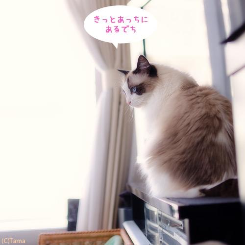 20120613_09.jpg