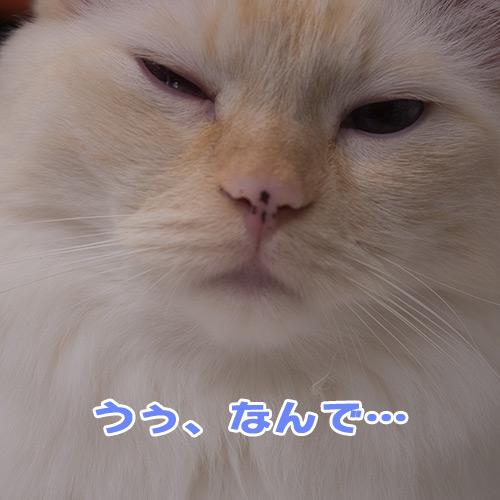 20120626_1.jpg