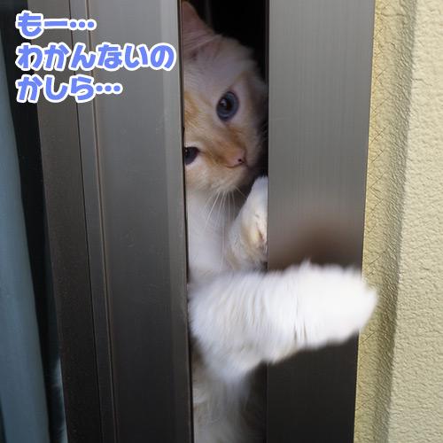 20120713_4.jpg