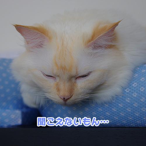 20120908_1.jpg
