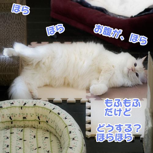 20121118_2.jpg