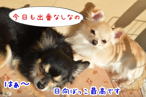 DSC_0121-01.jpg