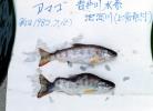 ウラン開発とともに現れた奇形魚