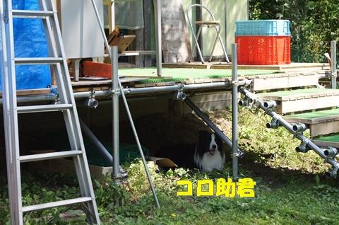 DSC07270.jpg