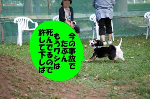 DSC09624.jpg