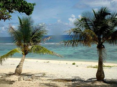 サイパン島は海洋島浜辺に生えるのは流れ着いたヤシの木downsize