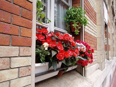 ルヴァロワ街角の窓辺の花downsize