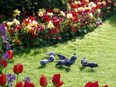 プランシェット公園で遊ぶ鳩さんたちREVdownsize