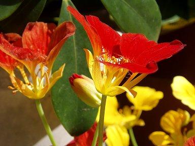 赤が鮮やかな庭の花dwonsize