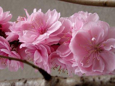 ピンク色の重なりが美しいdownsize