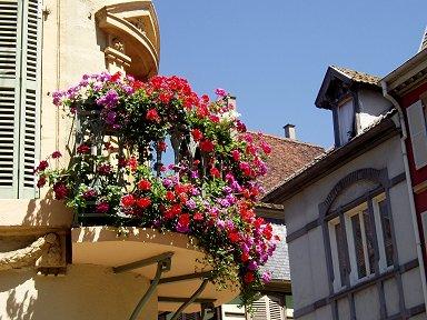 こぼれそうなテラスの花街中が花に溢れてるdownsize