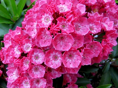 雨のしずくをとどめた赤い花downsize