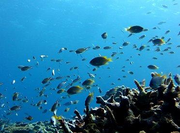 珊瑚礁はベビーがいっぱいREVdownsize