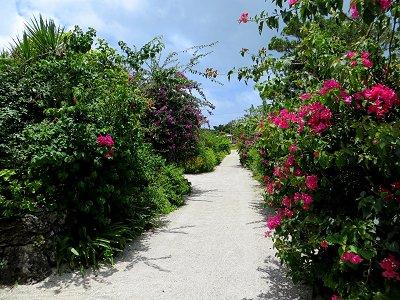 白い砂地とブーゲンビリアがまぶしい小路downsize