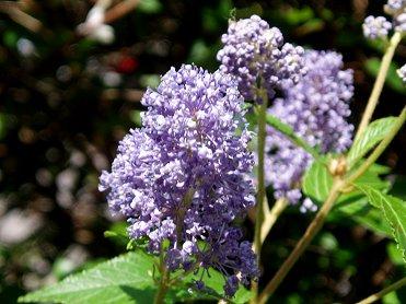 風に揺れる薄紫の花REVdownsize