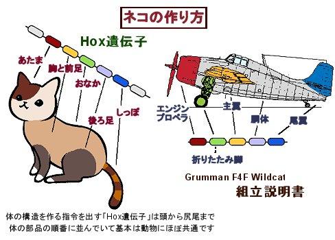 ネコの作り方downsize