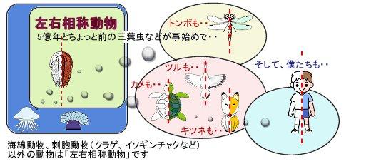 説明図Fig3