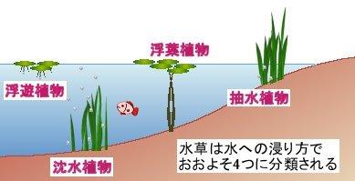 4種の水草
