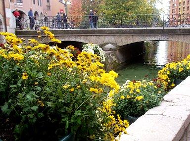 小さな運河は花で飾られていますREVdownsize P1010285