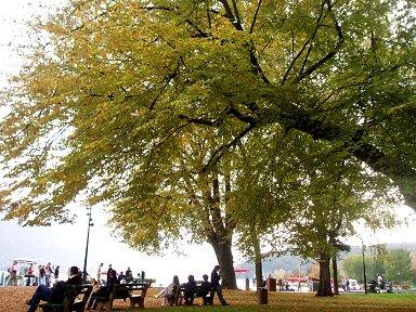 湖畔のシャン・ド・マルス公園(Champ de Mars)の木陰downsize P1010202