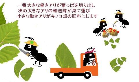 ハキリアリの農業