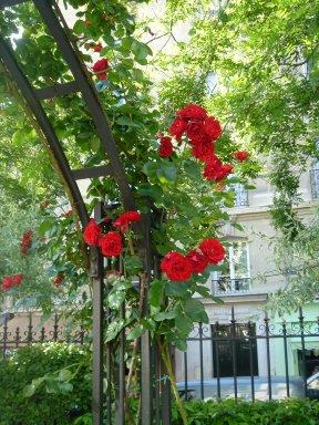 パリ17区ペレール大通公園の赤いバラdownsize