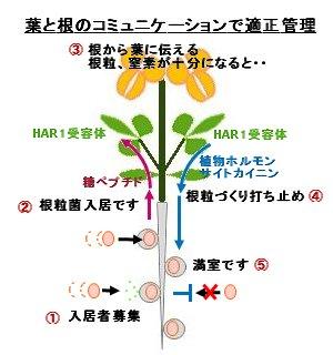 葉と根のコミュニケーションで適正管理