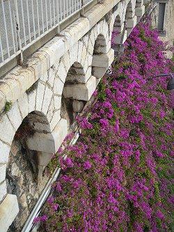 コートダジュールの村ヴィルフランシュシュルメール駅ホーム下の崖は花がいっぱいdonsize