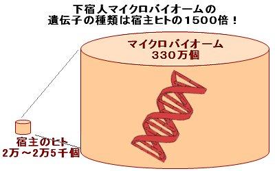 下宿人の遺伝子の数は1500倍