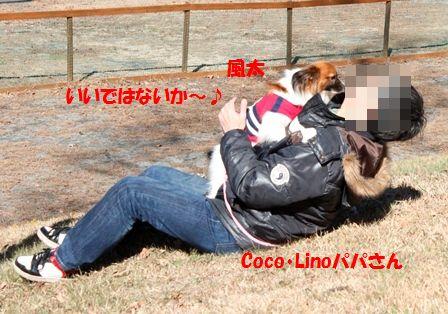 Cocoパパ2
