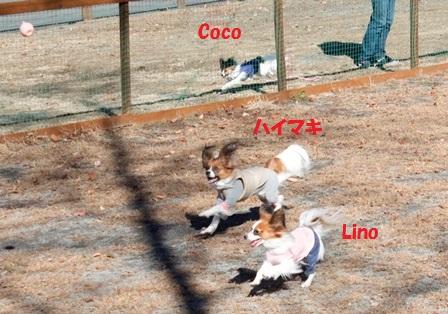 はいまき+りの+Coco