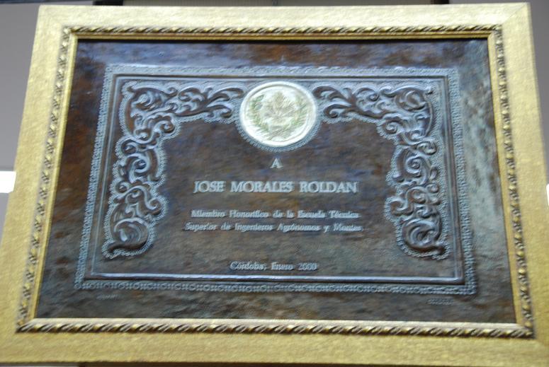 皮革の大学卒業証書