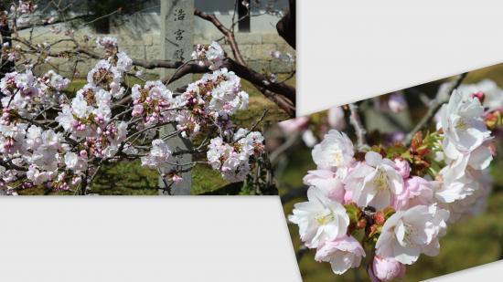 2013-04-006_convert_20130424201558.jpg