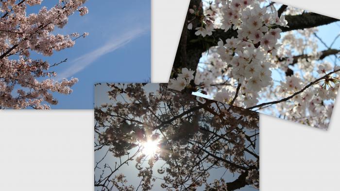 2013-04-045_convert_20130414011542.jpg