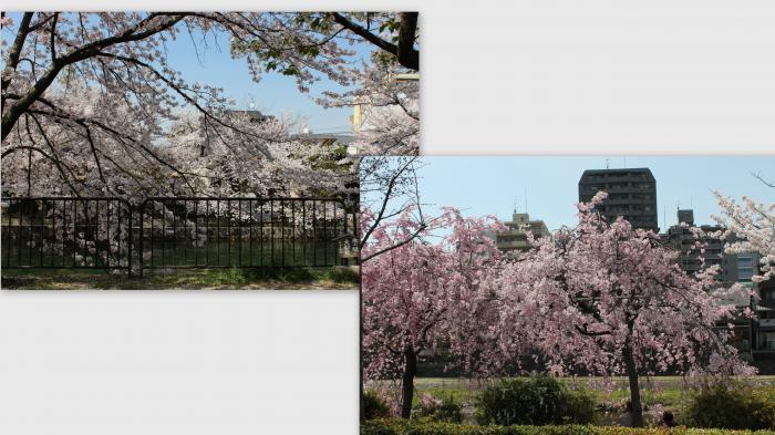 2013-04-05_convert_20130429010807.jpg