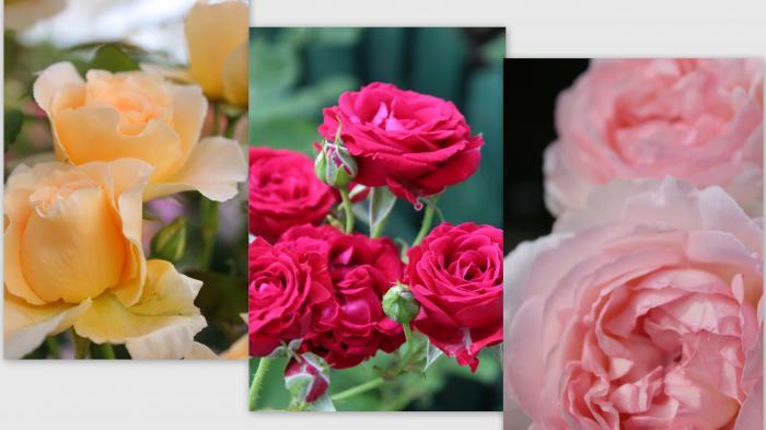2013-05-151_convert_20130528013932.jpg