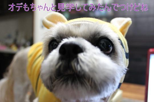 ・搾シ祢MG_2904_convert_20130217214708