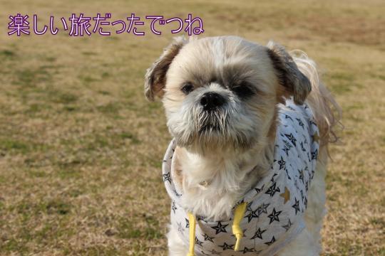 ・搾シ祢MG_2787_convert_20130218003052