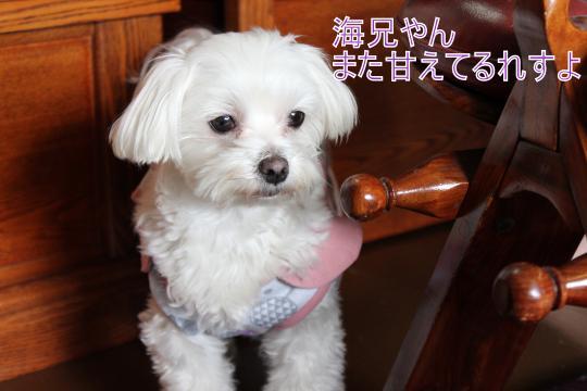・搾シ蝕MG_3017_convert_20130220011311