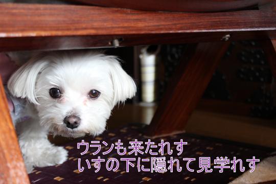 ・搾シ僮MG_3020_convert_20130220011342
