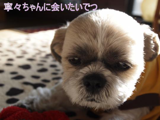 ・搾シ捻1089497_convert_20130223003641