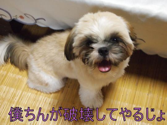 ・搾シ捻8265585_convert_20130224015941