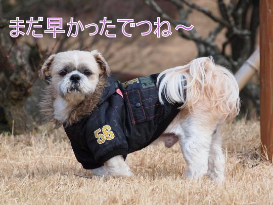 ・搾シ捻2217842_convert_20130226005554