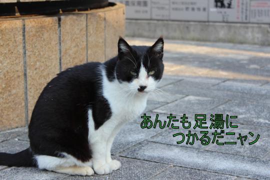 ・搾シ蝕MG_3080_convert_20130307012747