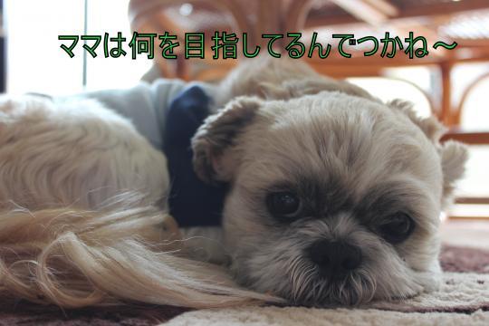 ・搾シ肘MG_3341_convert_20130310012314