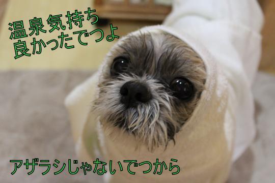 ・搾シ祢MG_3283_convert_20130313003749