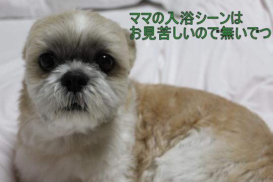 ・搾シ祢MG_3284_convert_20130313003806